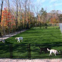 Synthetic Turf | Dzingle's Landscaping LLC — Serving the Auburn and Seattle Washington area Pet Grass, Seattle Washington, Auburn, Golf Courses, Landscaping, Pets, Outdoor, Outdoors, Yard Landscaping