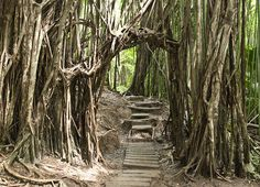 I took this hike alone, and I have never felt so alive. and covered in sweat.  Manoa Falls Trail by Go Visit Hawaii, via Flickr
