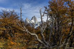 On my way to Fitz Roy in Patagonia by Bob Machado on 500px