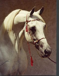 Arabians, some of the prettiest horses in the world.