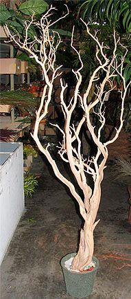 5 ft tree