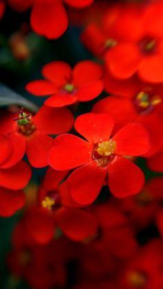 Red | Rosso | Rouge | Rojo | Rød | 赤 | Vermelho | Color | Colour | Texture | Form |
