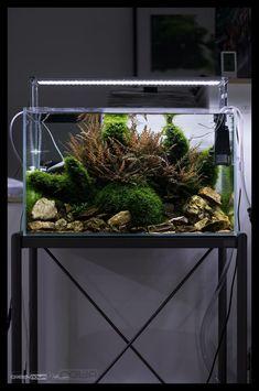 Amazing Aquascape Gallery Ideas that You Never Seen Before - DecOMG Aquarium Terrarium, Aquarium Setup, Nano Aquarium, Diy Aquarium, Nature Aquarium, Aquarium Design, Aquarium Fish Tank, Planted Aquarium, Aquarium Ideas
