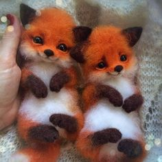 "cute fox Comment ""fox"" in your language Hand crafted baby foxes Follo Baby Animals Pictures, Cute Animal Photos, Cute Animal Drawings, Funny Animal Pictures, Baby Animals Super Cute, Cute Little Animals, Cute Funny Animals, Cute Cats, Fluffy Animals"