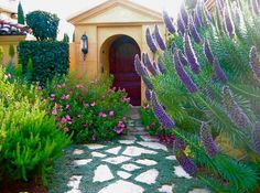 Awash with color, this walkway combines striking Mediterranean plants for a long-lasting floral display. All plants are evergreen and their pretty form and attractive foliage fill the garden year-round. Low maintenance, they are drought, tolerant and deer resistant.