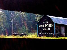 Mail Pouch Barn in Scioto County, Ohio ......looks like pic is taken between fence rails....cool