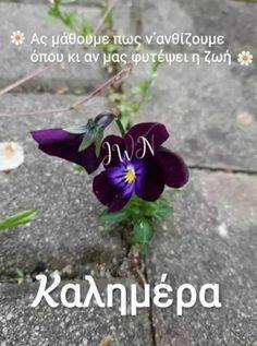 Good Morning Texts, Plants, Life, Plant, Planets