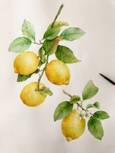 Discover recipes, home ideas, style inspiration and other ideas to try. Lemon Painting, Lemon Watercolor, Fruit Painting, Watercolor Drawing, Watercolor Illustration, Watercolor Flowers, Paintings Of Fruit, Botanical Drawings, Botanical Art