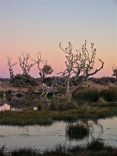 Mungerannie Wetlands at Dusk 2 by BronwynParry186. Postcards, cards and prints available now at Redbubble.com