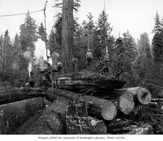 Loggers on stack of logs with donkey engine in background Merrill & Ring Lumber Company, Pysht, ca. 1927