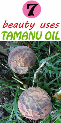 All about natures beauty miracle Tamanu oil and uses. The benefits and uses of pure and there is no need for complicated skin care routine to get a great result. Take one simple step to help get rid of your beauty troubles. Tamanu oil is a lovely oil that is used for remarkable skin repair. This has been used by women for centuries to keep the skin looking young healthy and radiant. #tamanuoiluses #benefitsoftamanu #naturalbeauty #tamanuflower #tamanufruit