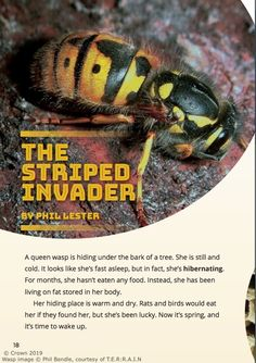 Series: School Journal Level 2 May 2019 Curriculum level: 2 Reading year level: 4 by Phil Lester The life cycle of the wasp. Phil Lester, Science Books, Queen, Wasp, Life Cycles, Conservation, Curriculum, Literacy, Literature