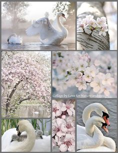 Collage of Beautiful Colors Beautiful Collage, Beautiful Birds, Beautiful Pictures, Collages, Color Collage, Mood Colors, Photo Images, Colour Board, Colour Schemes