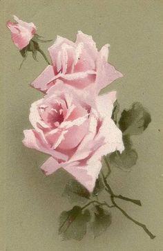 pink roses sage green