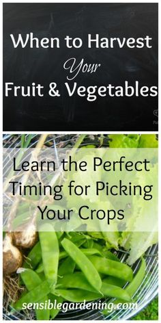 When to Harvest your Fruit and Vegetables with Sensible Gardening. Learn the…