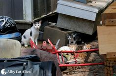 PCAT was able to TNR theses kittens found in St. Helena Parish, and they will…