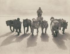 Post with 163930 views. Rare 100 year old photos captured the first Australasian Expedition to Antartica