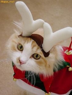 The grand traditon of turning your beloved pets into the center of attention at Christmas gatherings...