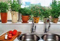 Aprenda a cultivar em vasos os seus temperos preferidos!