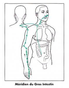Meridien gros intestin