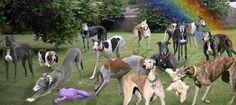 Greyhound Gardens – Hearts