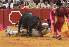 Sobre los toros, crimen legal, incultura, maltrato animal, tauromaquia, Toros, Tortura, violencia legal, Iniciativa Legislativa Popular