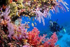 Billedresultat for koralrev