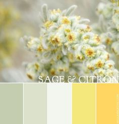yellow and sage green - Google Search