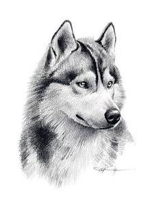 Wonderful All About The Siberian Husky Ideas. Prodigious All About The Siberian Husky Ideas. Husky Tattoo, Tattoo Wolf, Husky Drawing, Pencil Drawing Tutorials, Drawing Ideas, Drawing Art, 3d Drawings, Pencil Art, Animal Pencil Drawings
