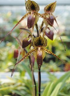 "Catherine Vadon: ""Mythos Orchideen"""