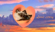 Love Story Cat Aesthetic, Photo Dump, Cute Memes, Love Pictures, Reaction Pictures, Haha Funny, Cat Love, Cool Cats, Kittens