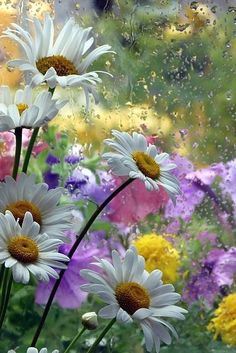 Find images and videos about nature, flowers and daisy on We Heart It - the app to get lost in what you love. Spring Flowers, Wild Flowers, Rain Flowers, Floral Flowers, Flower Art, Florals, Flower Wallpaper, Flower Photos, Belle Photo
