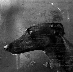 Photo methods IB: Greyhounds. by Kelsey Mackaness, via Behance