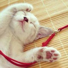 猫 寝顔 可愛すぎ - Google 検索