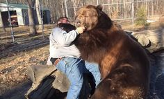 Russian Man Relaxes With Best Friend, Also His Friend Is A Bear