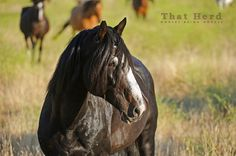 Daily Blog | That Herd | Horses Being Horses | Page 9