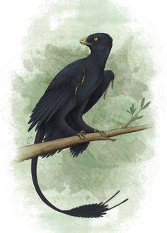 Microraptor zhaoianus - Xanthe