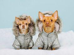 Наши любимые питомцы нуждаются в качественной зимней одежде