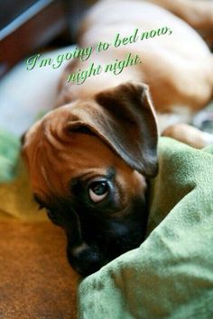 Image result for good night animals photos