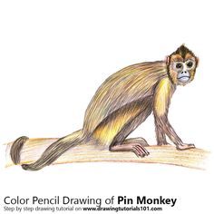 Pin Monkey with Color Pencils [Time Lapse]