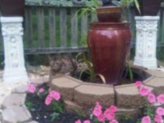 My diy water fountain