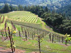 Arista Winery germany?
