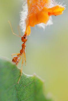 Ant n Flower Patricius Hartono