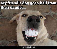 My Friend's Dog Got A Ball #lol #haha #funny
