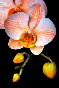 Orange Mystique Orchid