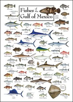 Fishes Of The Gulf Of Mexico.