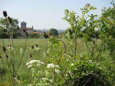 St Savinien through wild flowers