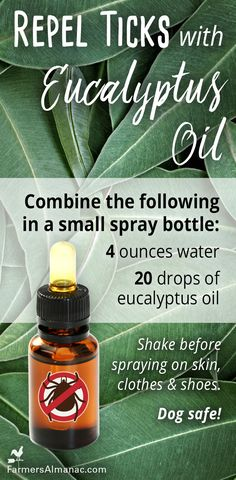 Remedies Try this home remedy to repel ticks with eucalyptus essential oil! No harsh chemicals! - Farmers' Almanac - From easing chest congestion to an effective pest repellent -- see how one small bottle can be a beneficial multi-tasker in your home! Doterra Essential Oils, Essential Oil Diffuser, Essential Oil Blends, Tick Repellent Essential Oils, Essential Oil Bug Spray, Young Living Oils, Young Living Essential Oils, Eucalyptus Oil Benefits, Eucalyptus Essential Oil Uses