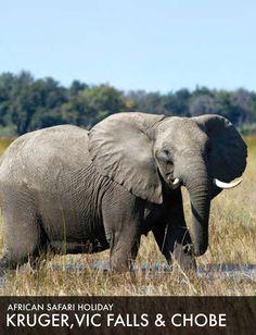 African Safari Tour 2015: Kruger, Victoria Falls and Chobe