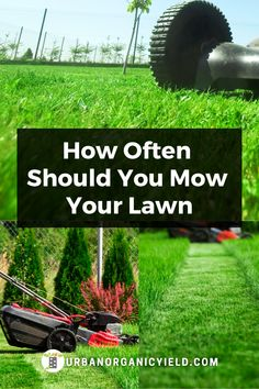How often should you mow your lawn? You just need to cut your grass at the right times. Learn more on when, how often and other factors in taking care of your lawn so it will look good for your landscaping. #Lawn #Lawncare #Landscaping #Gardening #UrbanOrganicYield Look Good For You, Propagation, Lawn Care, Green Grass, Take Care Of Yourself, Amazing Gardens, Factors, Lush, Landscaping